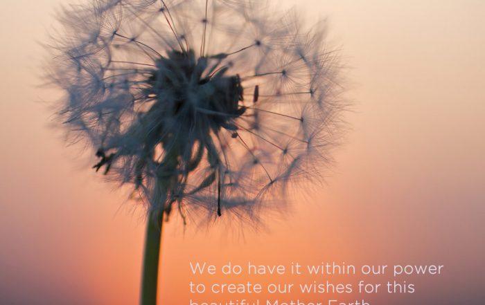 Jane-Kennard-Shared-Wisdom-you-are-not-alone-wishes-photo-Wolfgang-Hasselmann-unsplash-1080